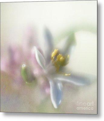 Lemon Blossom Metal Print