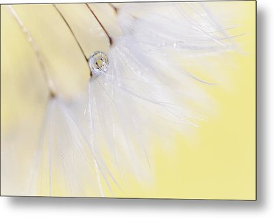 Metal Print featuring the photograph Lemon Drop by Amy Tyler