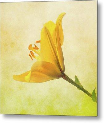 Lemon Lily Metal Print by Roy McPeak