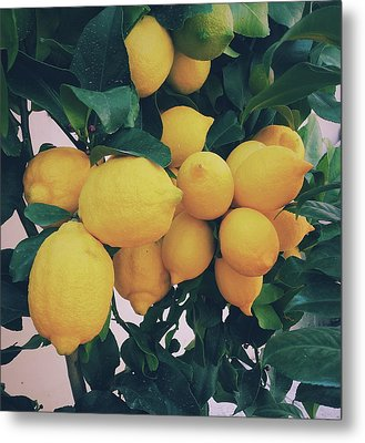 Lemon Tree Metal Print by Happy Home Artistry
