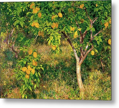 Metal Print featuring the painting Lemon Tree by Henry Scott Tuke