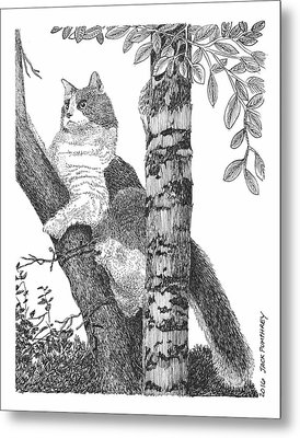 Leo The Cat In The Tree Metal Print by Jack Pumphrey