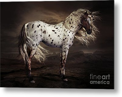 Leopard Appalossa Metal Print by Shanina Conway