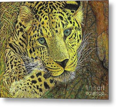 Leopard Gaze Metal Print