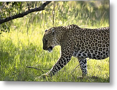 Leopard In The Grass Metal Print