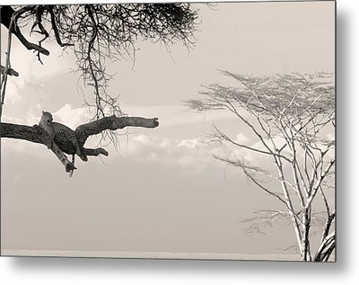 Leopard Resting On A Tree Metal Print