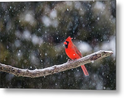 Metal Print featuring the photograph Let It Snow by Mircea Costina Photography