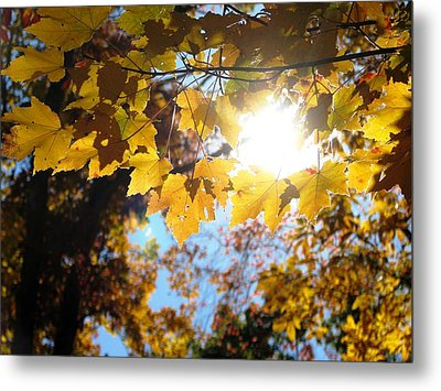 Let The Sun Shine In Metal Print by Angela Davies