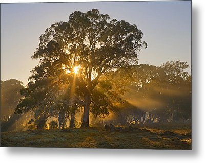 Let There Be Light Metal Print by Mike  Dawson