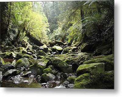Lichen And Moss 2 - Nature Metal Print by Virginia Halford