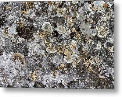 Metal Print featuring the photograph Lichen At The Cemetery by Stuart Litoff