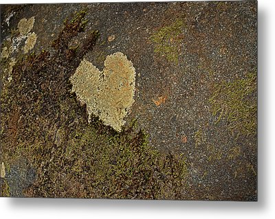 Lichen Love Metal Print by Mike Eingle