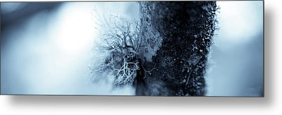 Lichen Macro 1206 Nature Abstract Metal Print
