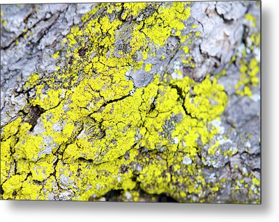 Metal Print featuring the photograph Lichen Pattern by Christina Rollo