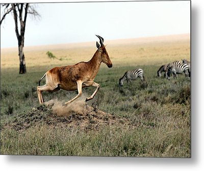 Life In The Wild Metal Print by Happy Home Artistry