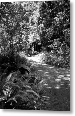 Life Twist And Tures  Bw Metal Print by Ken Day