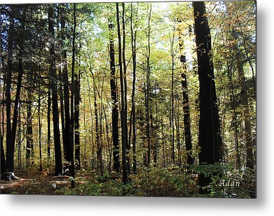 Metal Print featuring the photograph Light Among The Trees by Felipe Adan Lerma