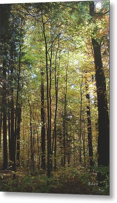 Metal Print featuring the photograph Light Among The Trees Vertical by Felipe Adan Lerma