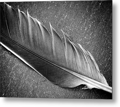 Light As A Feather Metal Print by Karen Stahlros