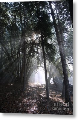 Light Cathedral Metal Print by JoAnn SkyWatcher