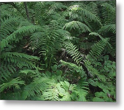 Light Finds The Forest Floor Metal Print