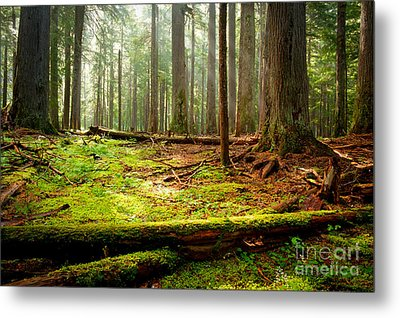 Light In The Forest Metal Print by Idaho Scenic Images Linda Lantzy