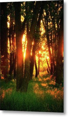Metal Print featuring the photograph Light Of The Forest by John De Bord