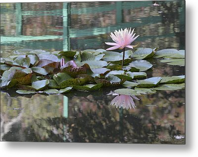 Light Pink Water Lily Metal Print by Linda Geiger