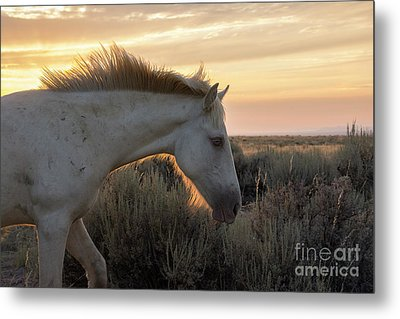 Light Shining Through Metal Print by Nicole Markmann Nelson