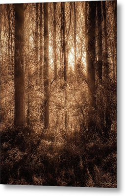 Light Trough The Forest Metal Print
