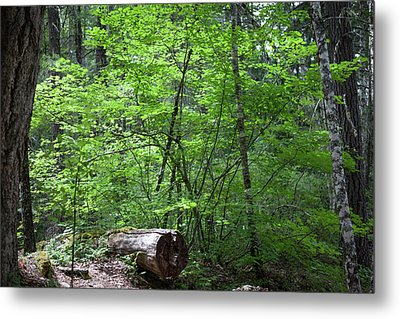 Lighting Up My World Forest Photography By Omashte Metal Print by Omaste Witkowski