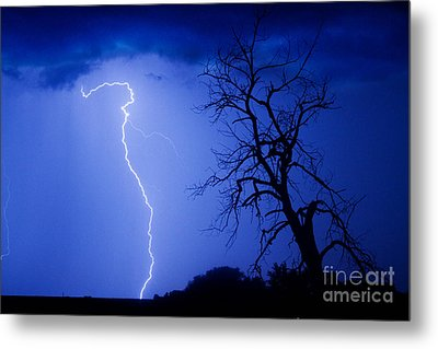 Lightning Tree Silhouette Metal Print by James BO  Insogna
