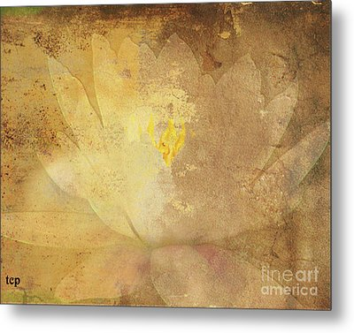 Metal Print featuring the photograph Lights On Lily by Traci Cottingham