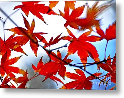 Like Autumn Butterflies In The Breeze Metal Print by Kaye Menner