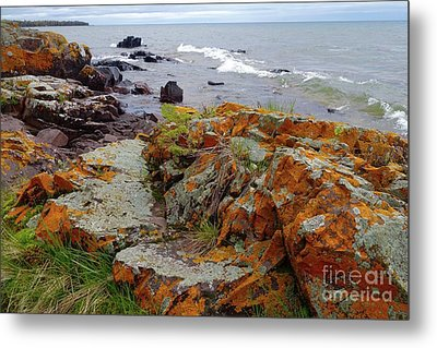Liking The Lichens Metal Print by Sandra Updyke