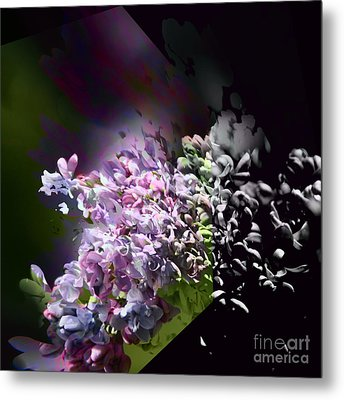 Lilac 2 Metal Print by Elaine Hunter