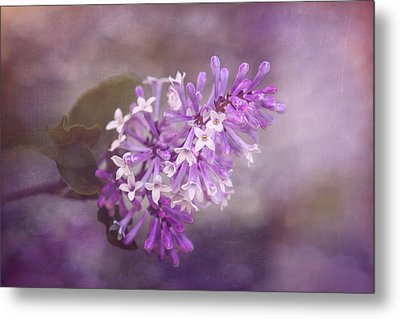 Lilac Blossom Metal Print by Tom Mc Nemar