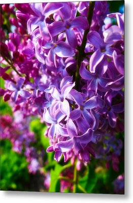 Lilac In The Sun Metal Print by Julia Wilcox