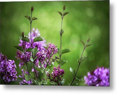 Lilac Memories Metal Print by Karen Casey-Smith