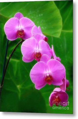 Lilac Orchid Beauties Metal Print by Sue Melvin