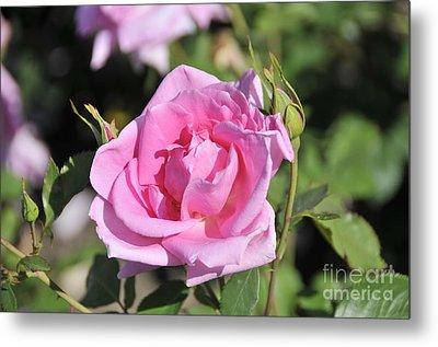 Lilac Rose 2 Metal Print by Rudolf Strutz