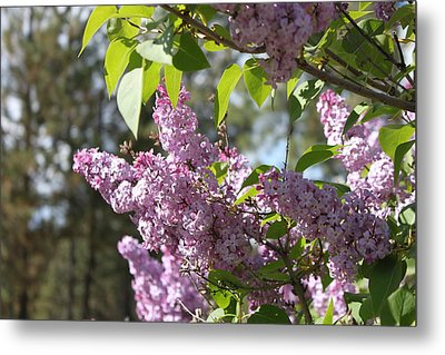Metal Print featuring the photograph Lilacs 5545 by Antonio Romero