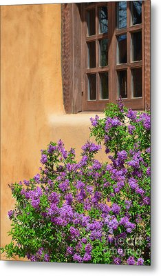 Lilacs And Adobe Metal Print by Catherine Sherman