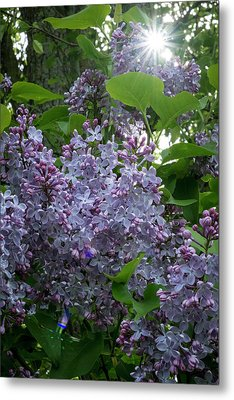 Lilacs And Sunshine Metal Print