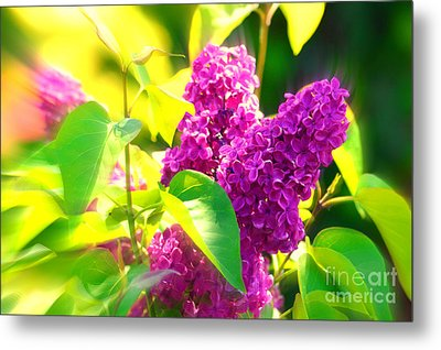 Metal Print featuring the photograph Lilacs by Susanne Van Hulst