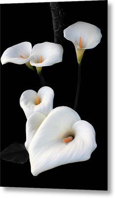 Lilies Metal Print by Aidan Moran
