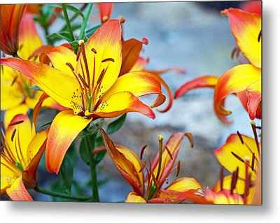 Lilies Of The Field #1 Metal Print