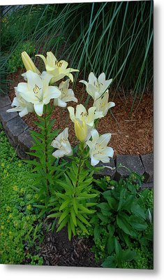 Metal Print featuring the photograph Lillies by Ferrel Cordle