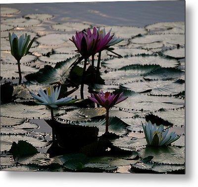 Lillies On The Lake Metal Print by Kimberly Camacho