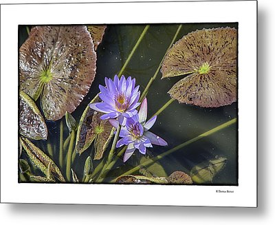 Metal Print featuring the photograph Lillies by R Thomas Berner